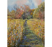 Path in the Meadow Photographic Print