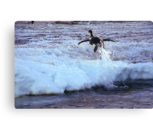 Emperor Penguin 'Flying' Home Canvas Print