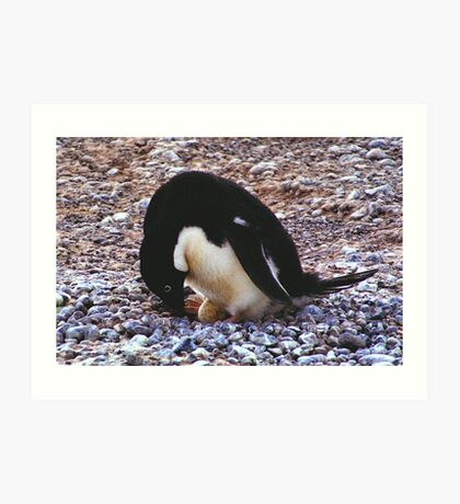 Adelie Penguin on its Nest Art Print