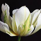 Spring Splendour by Wendi Donaldson