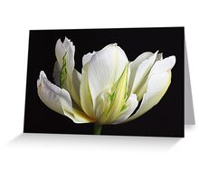 Spring Splendour Greeting Card