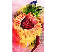 The loose style sunflower, watercolor Photographic Print