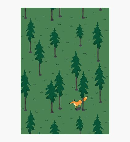 Fox in the woods. Photographic Print