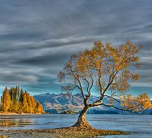 Lone Tree, Lake Wanaka, New Zealand by Images Abound | Neil Protheroe
