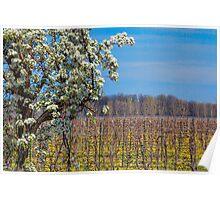 Vineryards vs. Orchards Poster
