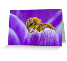 Pollen-covered Bee On Crocus Petal. Greeting Card