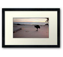 Etty Bay Cassowary Framed Print