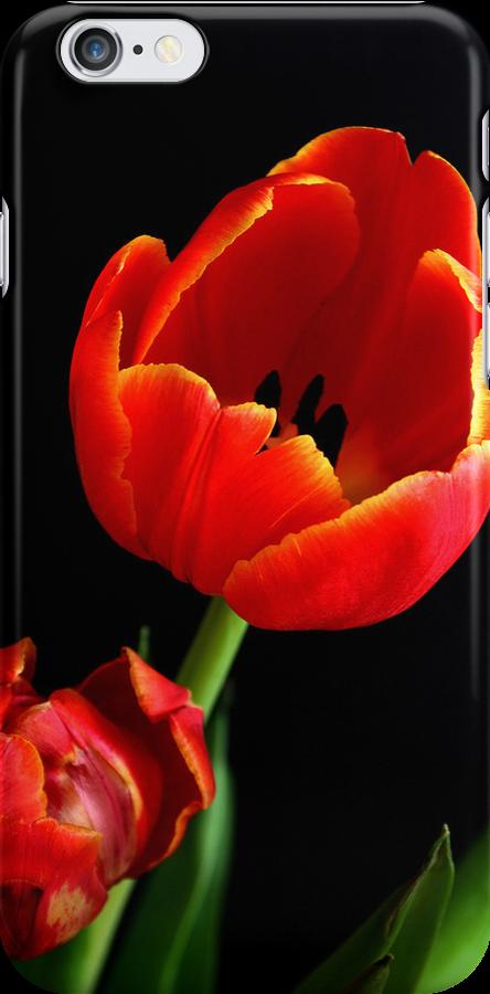 Tulips 2 by Janine  Hewlett
