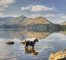 Catbells and Dog by VoluntaryRanger