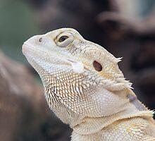 iguana in the jungla by spetenfia
