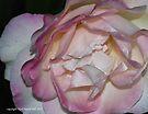 macro flora 014 by Karl David Hill