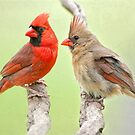 Mama and Daddy Share a Bit of Gossip by Bonnie T.  Barry
