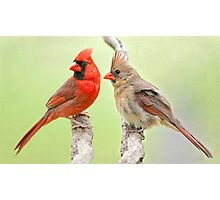 Mama and Daddy Share a Bit of Gossip Photographic Print