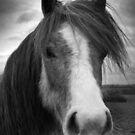 My Little Pony  (6-45) by Raymond Kerr