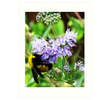 bumble bee on lavender Art Print