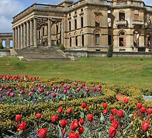 Witley Tulips by Spencer Trickett