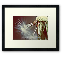 chasing the stars Framed Print