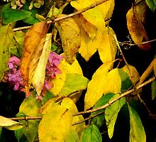 Vines and Blossoms by RC deWinter