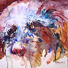 Rollo the Labradoodle by Glenapp