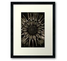 African Daisy in monochrome Framed Print