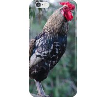 Proud Rooster iPhone Case/Skin