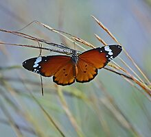 Monarch Butterfly by CraigSev