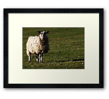North Yorkshire Sheep Framed Print