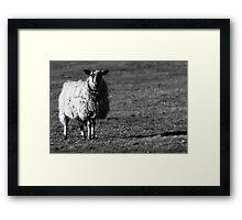 North Yorkshire Sheep in Black & White Framed Print