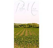 Crop Photographic Print