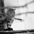Caught You! by Thomas Zagler