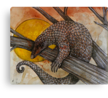 The Pangolin Canvas Print