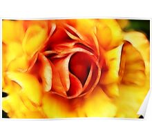 Orange and Yellow Rose Poster