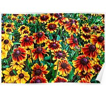 Yellow and Red Black-Eyed Susan Flowers Poster