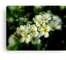 DEAD PEAR TREE BLOSSOMS Canvas Print