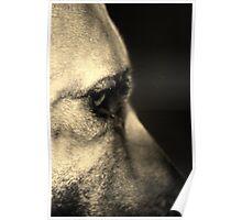 Canine Concerns #2 Poster