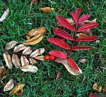 Fallen Leaves and Berries by MidnightMelody