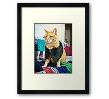 Dogs are dogs, ducks are ducks but cats are people. Framed Print