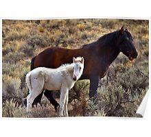 Rare Wild White Foal Poster