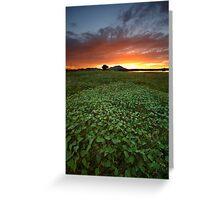 Field of Greens 2 Greeting Card