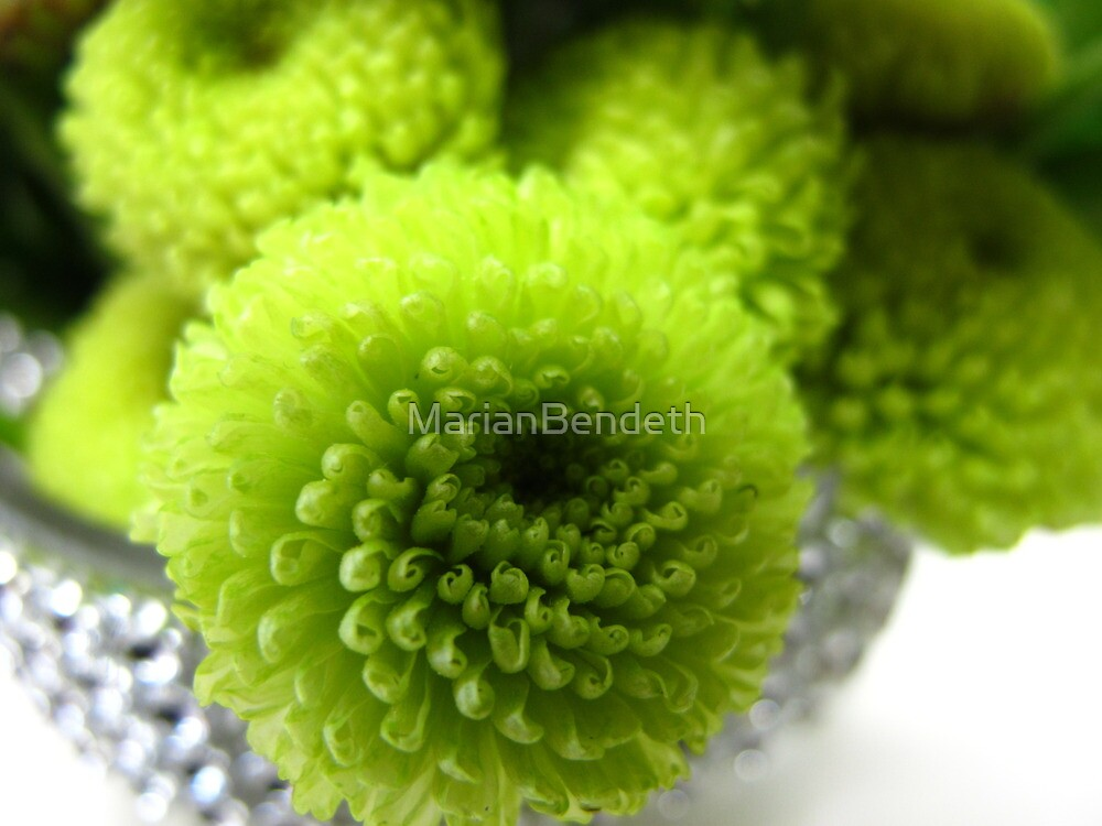 Baby Greens by MarianBendeth