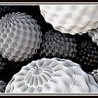 White coral by vivien styles