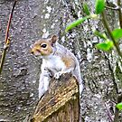 Squirrel in the Spring... by RichImage