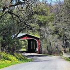 A Country Drive by Barbara  Brown