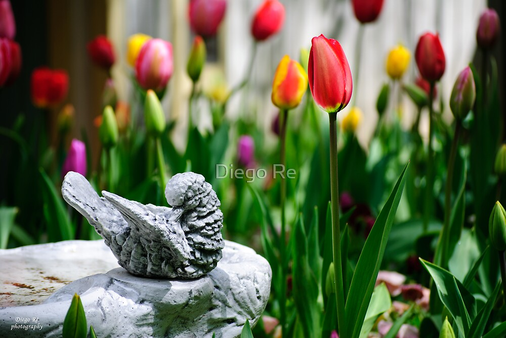 A Bird And A Tulip by Agro Films