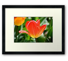 Full Bloomed Tulip Framed Print