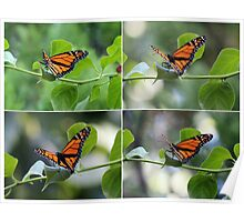 Orange Butterflies Collage Poster