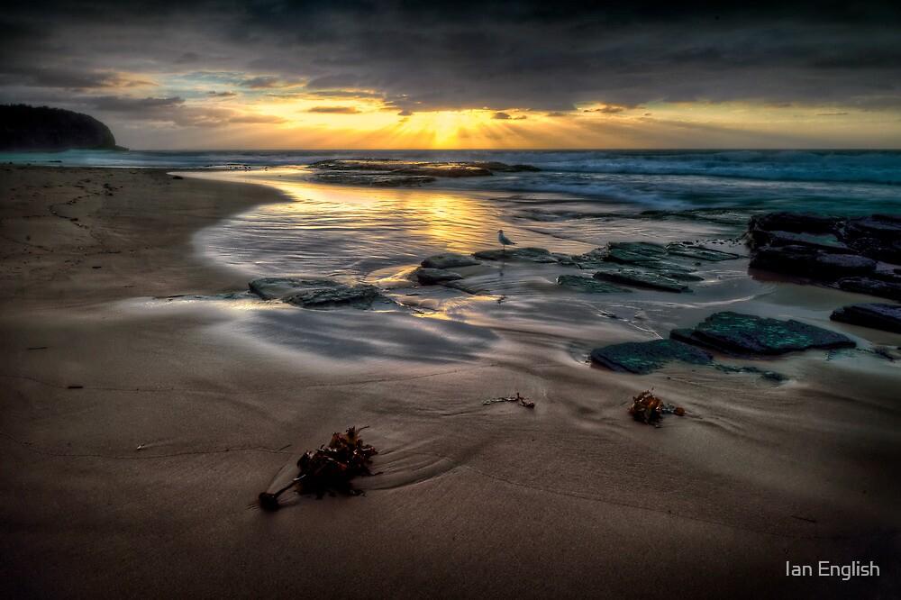 Turimetta Rays by Ian English
