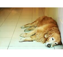 Tired like me Photographic Print
