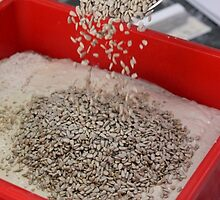 Baker adds sunflower seeds to the dough batter by PhotoStock-Isra