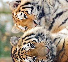 Tigers  by JEZ22